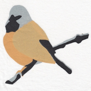 Black-throated Finch, Design: C.Kahler 2015